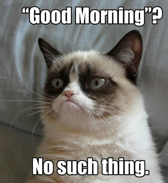 grumpy-cat-meme-good-morning-no-such-thi